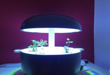 Plantui - Langsam wächst der Kräutergarten 2